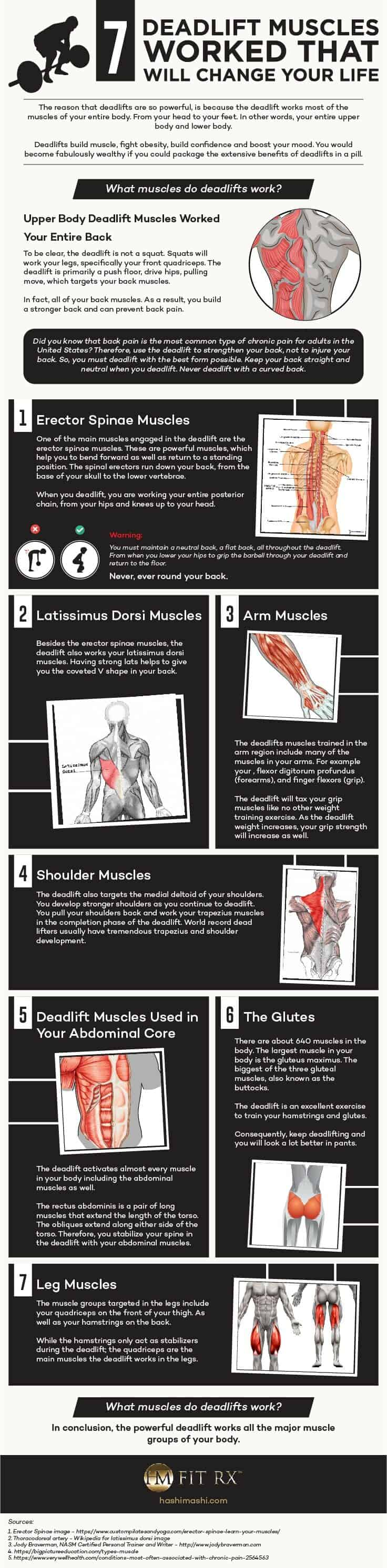 what muscle groups do deadlifts work infographic credit hashimashicom.bigscoots-staging.com